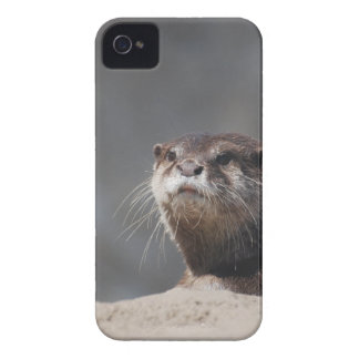 Cute River Otter iPhone 4 Covers