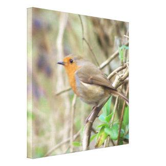 Cute Robin canvas wrap