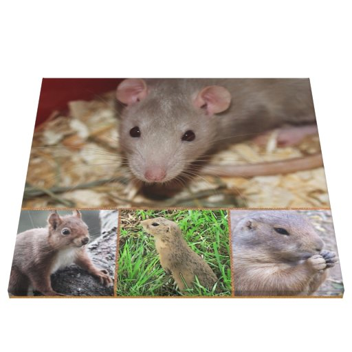 cute rodents stretched canvas prints