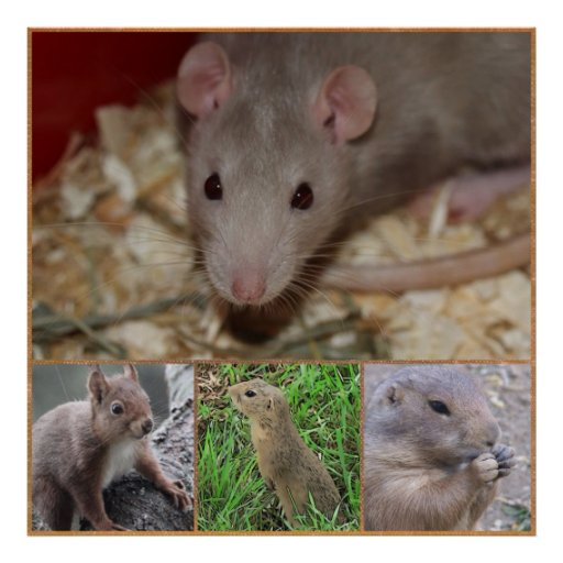 cute rodents posters