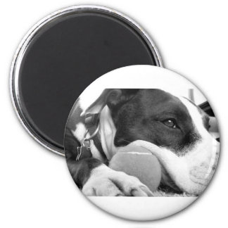 cute sad looking pitbull dog black white with ball 6 cm round magnet