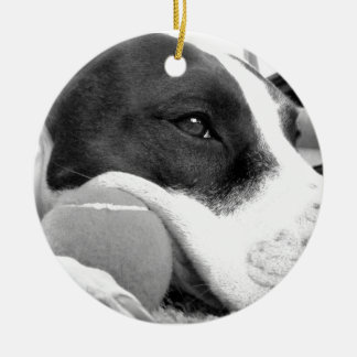 cute sad looking pitbull dog black white with ball christmas ornament