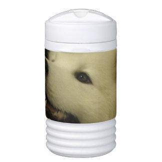 Cute Samoyed Drinks Cooler