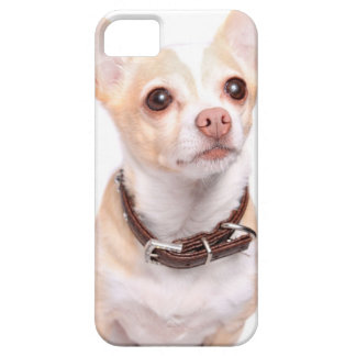 Cute sandy colored chihuahua dog iPhone 5 cover