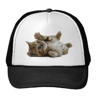 Cute save kitten cap