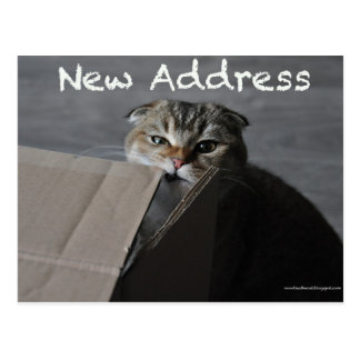 Cute scottish fold card cat funny moving address