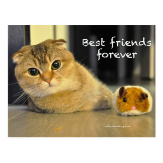 Cute scottish fold noodles cat best friends card postcard