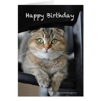 cute scottish fold noodles cat happy birthday card