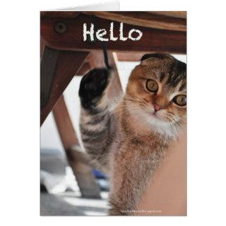 Cute scottish fold noodles cat hello card