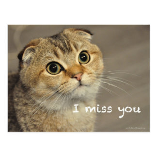 Cute Scottish fold noodles cat miss you postcard