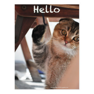 Cute Scottish fold noodles cat say hello postcard