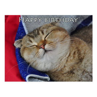 Cute Scottish fold Noodles funny cat birthday card Postcard