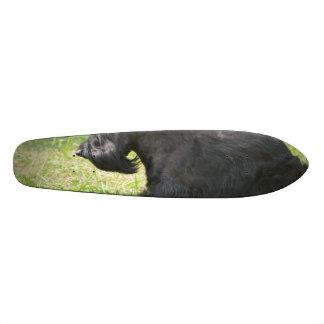 Cute Scottish Terrier Skateboards