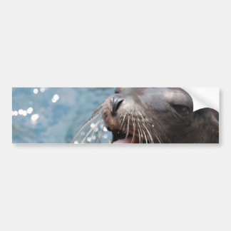 Cute Sea Lion  Bumper Stickers