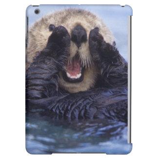 Cute Sea Otter | Alaska, USA