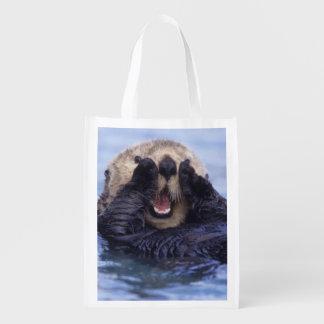 Cute Sea Otter   Alaska, USA