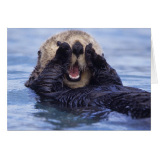 Cute Sea Otter | Alaska, USA Card