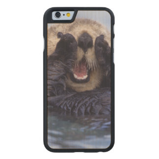 Cute Sea Otter | Alaska, USA Carved® Maple iPhone 6 Slim Case