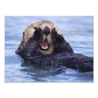 Cute Sea Otter | Alaska, USA Photo Print