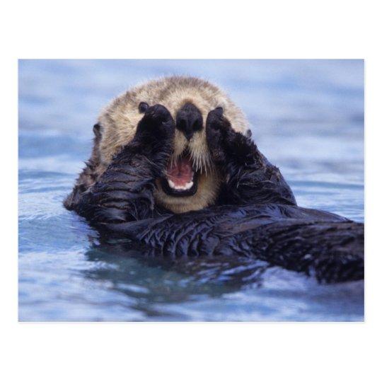 Cute Sea Otter   Alaska, USA Postcard