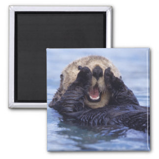Cute Sea Otter | Alaska, USA Square Magnet