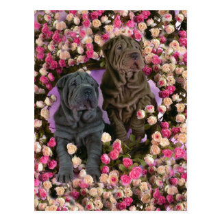 Cute Shar pei puppies in a bed of roses Postcard