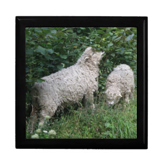 Cute Sheep Eating Leaves Gift Box