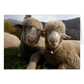 Cute Sheep Greeting Cards