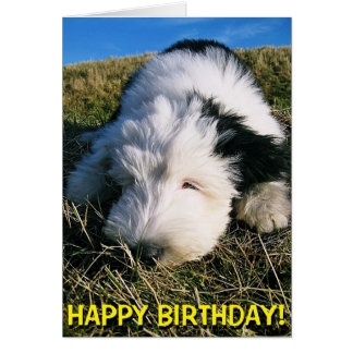 Cute sheepdog puppy birthday card