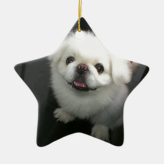 Cute shih tzu looking at the camera ceramic star decoration