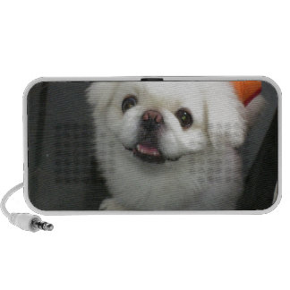 Cute shih tzu looking at the camera portable speakers