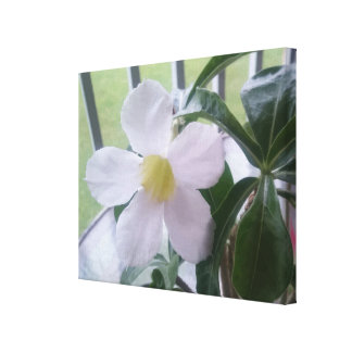 Cute Single White Flower Picture Wrapped Canvas