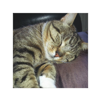 Cute Sleeping Cat Canvas
