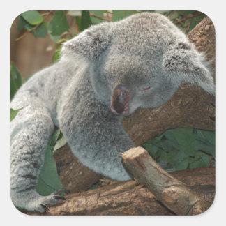 Cute Sleeping Koala Bear Square Sticker