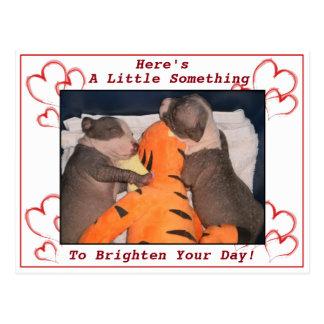 Cute Sleeping Pit Bull Puppy Card