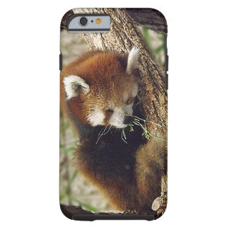 Cute Sleeping Red Panda w/ Food in Its Mouth Tough iPhone 6 Case