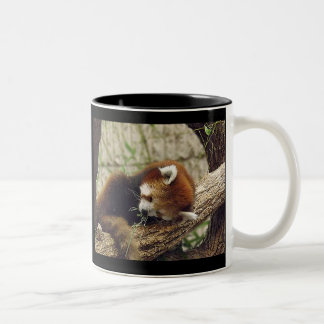 Cute Sleeping Red Panda w/ Food in Its Mouth Two-Tone Coffee Mug