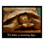 Cute Sleeping Tortoise Poster