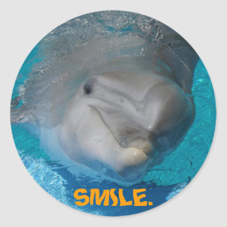 Cute smiling dolphin stickers