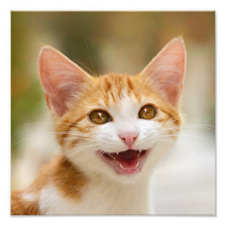 Cute Smiling Kitten Fun Cat Meow - Paperprint Photo