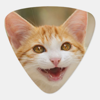 Cute smiling kitten funny cat meow guitar pick