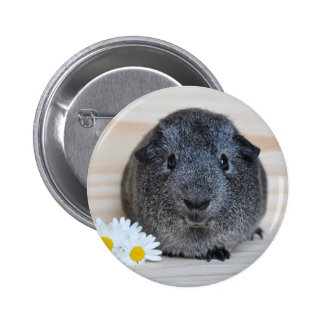 Cute Smooth, Silver Agouti Guinea Pig and Daisies Pinback Buttons