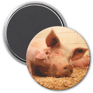Cute Sow with Piglets 7.5 Cm Round Magnet