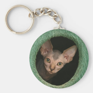 Cute sphynx kitten basic round button key ring