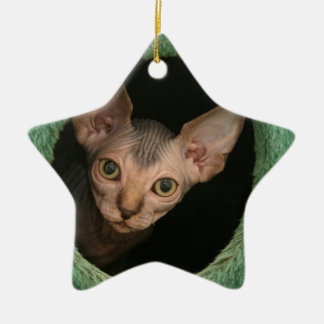 Cute sphynx kitten ceramic star decoration