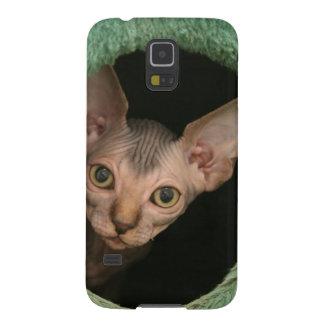 Cute sphynx kitten galaxy s5 cover
