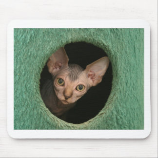 Cute sphynx kitten mouse pad