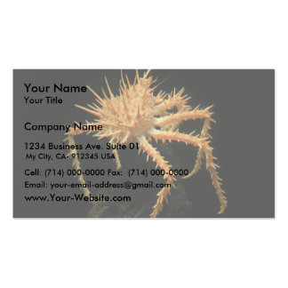 Cute Spiny Crab In The Aquarium At California Business Card Template