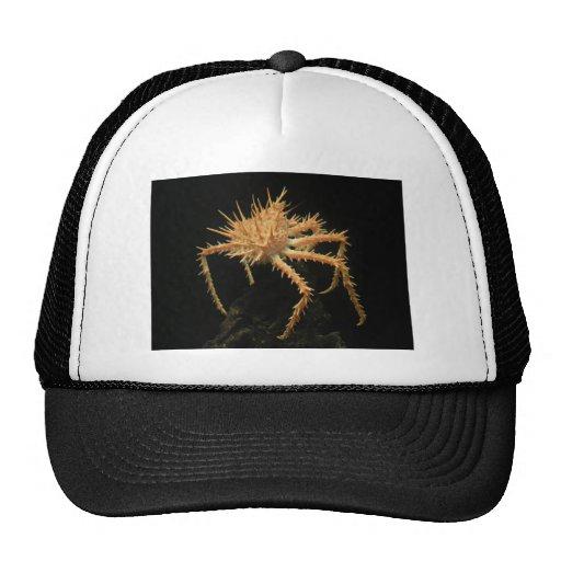 Cute Spiny Crab In The Aquarium At California Hat