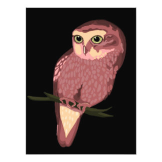 Cute Spotted Owl Photo Print